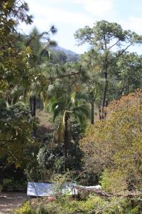 Pine Jungle