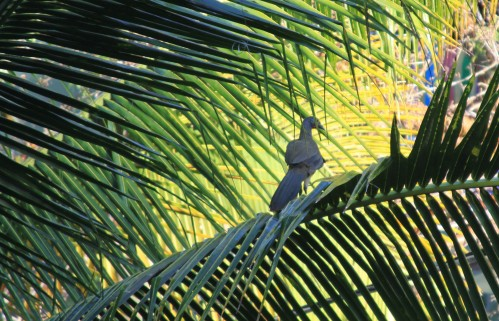 A partridge in a palm tree