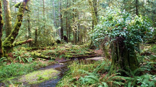 Where the giants fell, second growth forest, now a nature preserve on Gabriola Island