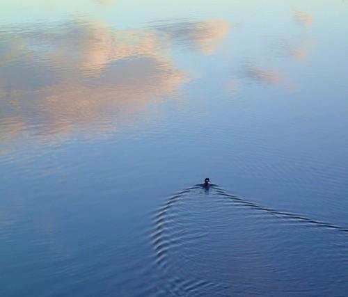 Sky swimmer.  Winter morning calm.