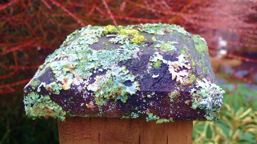 Lichen or not. Slowly, all resources return to their source.