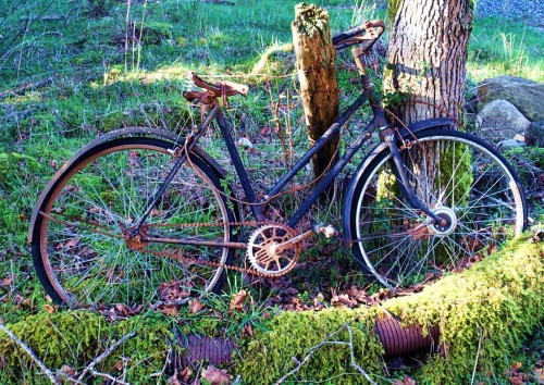 An old collision, an abandoned bicycle slowly recycles itself