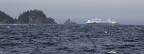 "A cruise ship in Queen Charlotte Strait. One salmon says to the other, ""Look at all the canned people!"""