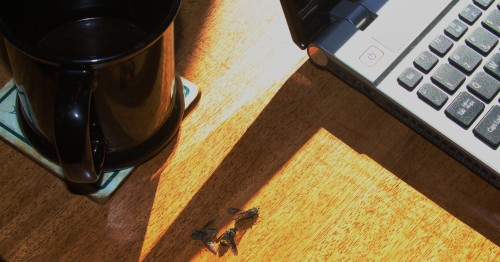The writer's Buzz A heap of horseflies begins to pile up with the first morning coffee