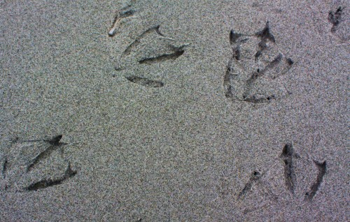 Happy feet. Gull tracks in the sand