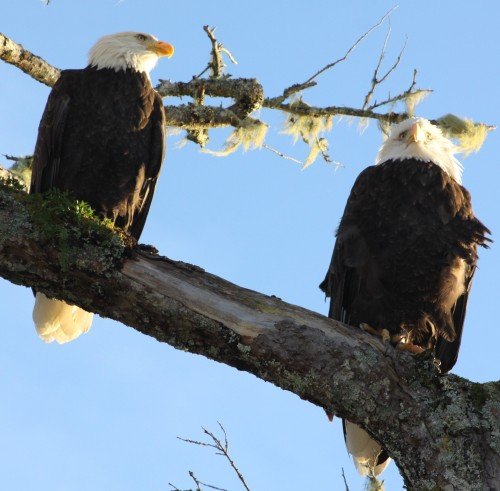 """Bloody hell it's cold!"" ""Wouldn't be so bad if we cuddled up."" ""Wot? We're eagles!"""