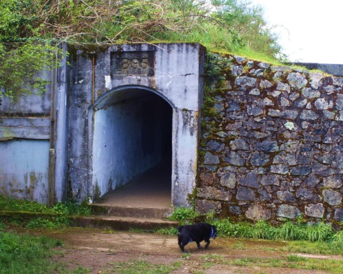 Jack and the big doghouse. Actually it's a tunnel providing sheltered access to one of the gun emplacements at Macaulay Point. Note the build date:1895