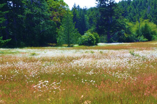 One of many  old farm meadows in East Sooke Park. Yes it IS real!