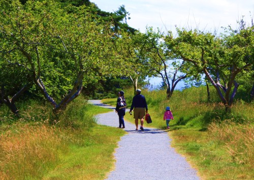 FAMILY Off for an afternoon through an old orchard to the beaches, fields and forest trails of East Sooke Park. The park is huge and delightful.