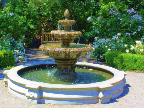 No fish, no coins, but a beautiful fountain among the blooms