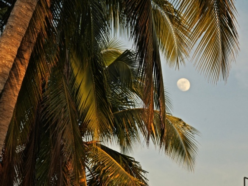 Same moon, same night. A few miles down the beach. Photo downloaded from the La Manzanilla online bulletin board. Mexico on my mind.