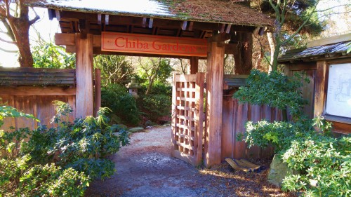 Chiba Garden North Vancouver has done a lovely job of developing its waterfront. This little Zen world is beneath an overhead walkway, beside a leash-free dog park and next to a train track. Very nice.