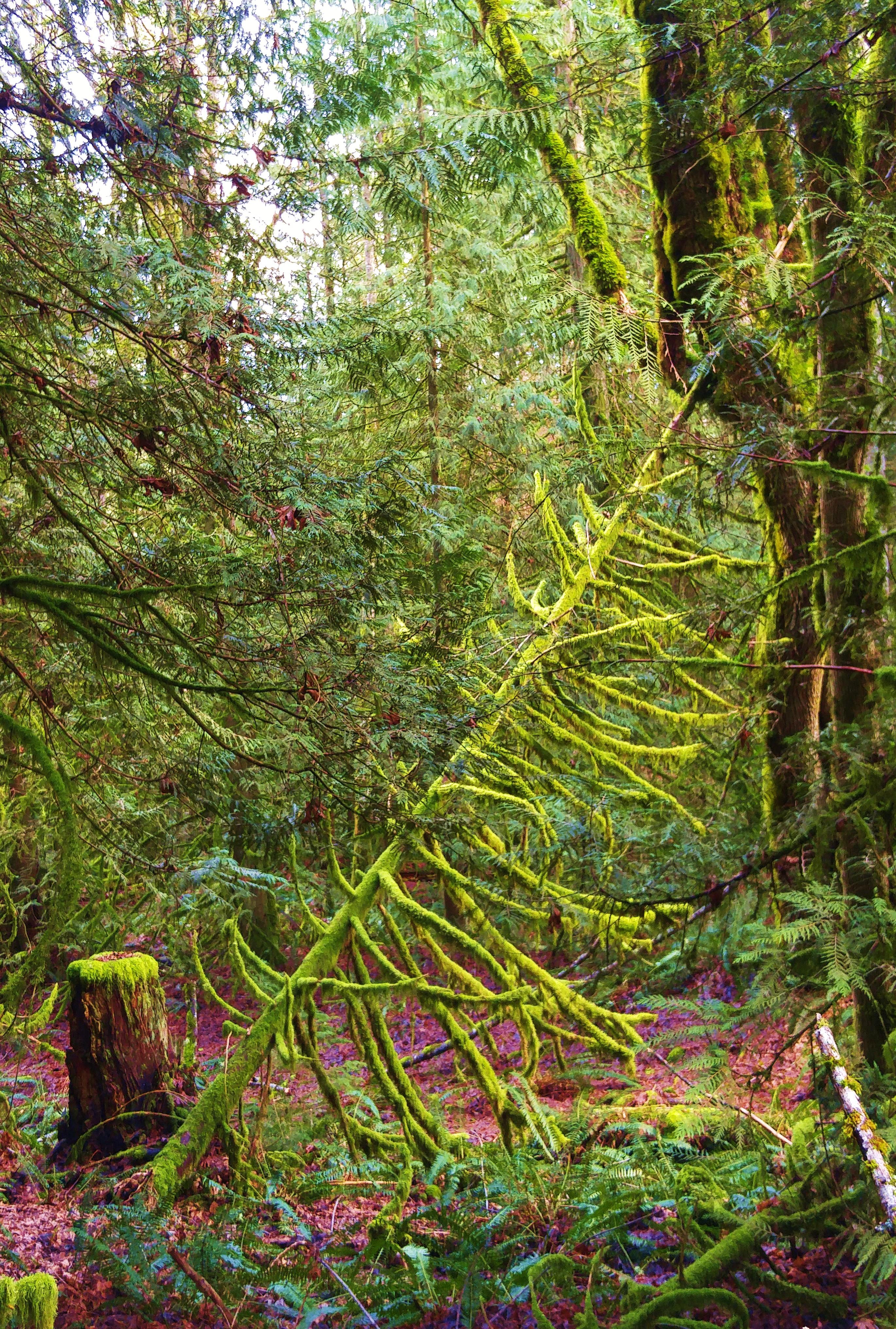 cedarjpg otter cedar rope tree swing 18